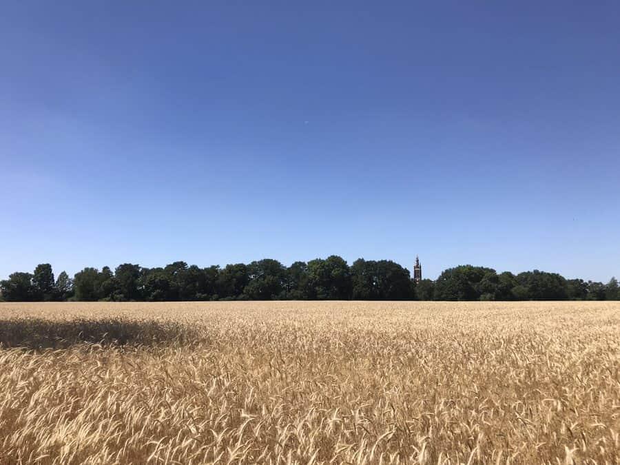 Blick über die Felder im Wörlitzer Park