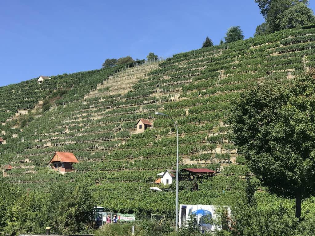 Steillage Mühlhausen - da sieht man auch das Fest der Steillagen Tage