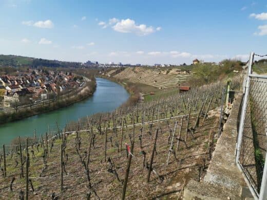 Ausblick vom Weinwanderweg auf den Neckar