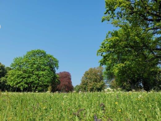 Der Übergang vom Unteren Schloßgarten in den Rosensteinpark bei herrlich blauen Himmel und bunten Bäumen im Frühling