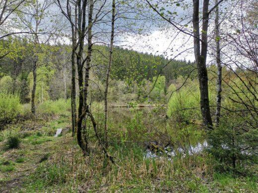 Teiche und Moore im Schwarzbachtal