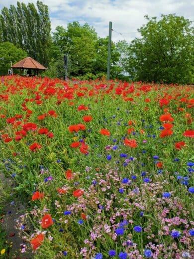 Blumen an einem Haus am Rande des Brunnenpfades
