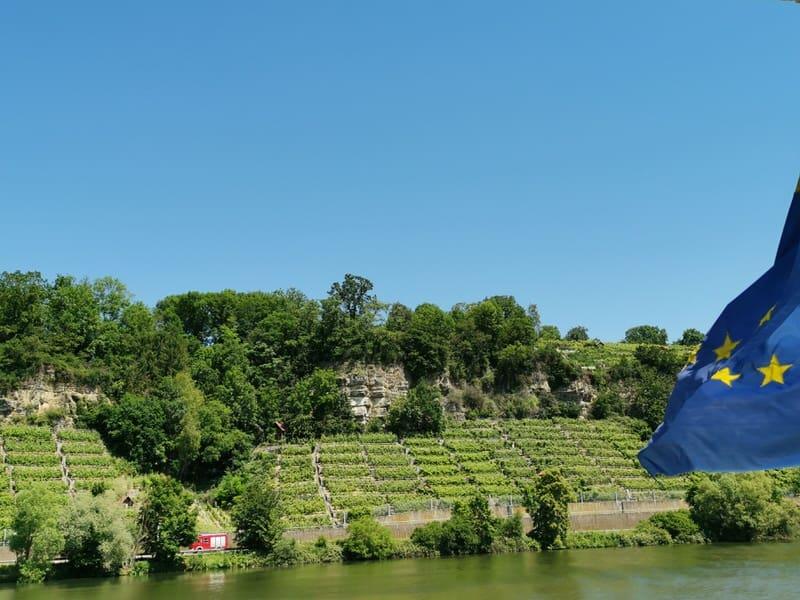 Weinberge am Neckar