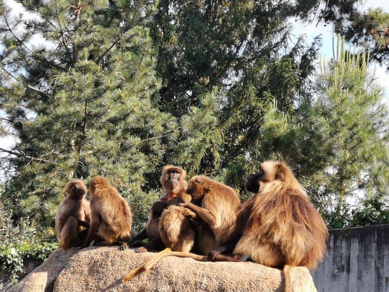 Affen in der Wilhelma