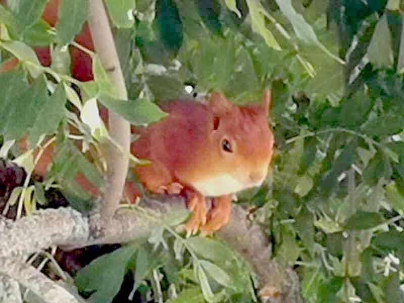 Eichhörnchen!