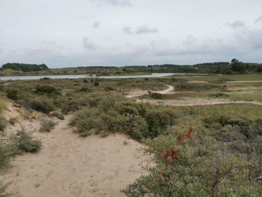 Vogelmeer im Nationalpark Zuid-Kennemerland