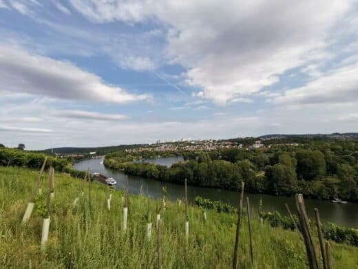 Ausblick über den Neckar auf dem Vier-Burgen-Weg