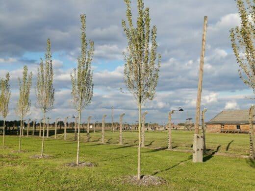 Unfassbar, wie groß das Konzentrationslager Auschwitz-Birkenau war
