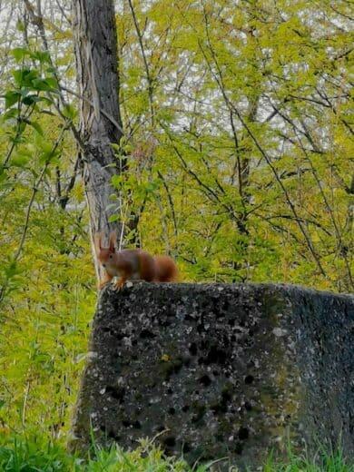 Eichhörnchen am Wartberg