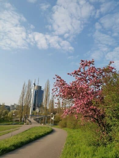 Und es blüht so schön derzeit in Stuttgart!