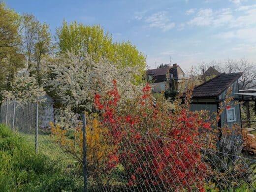 Schön blühende Sträucher in der Kleingartenanlage am Wartberg