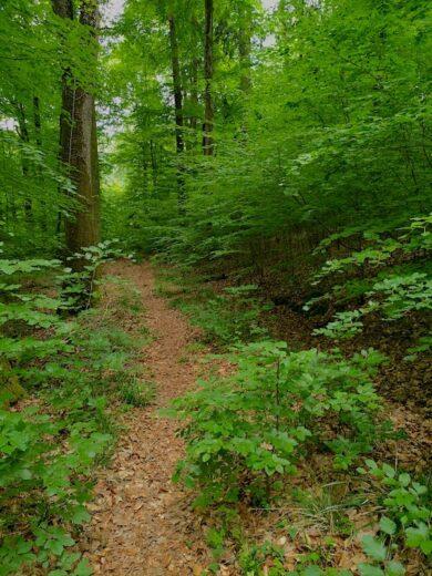 Weg durch den Wald bei Korb