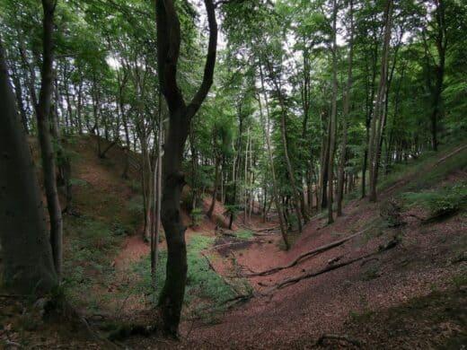 Eine Schlucht auf dem Wanderweg von Lohme zum Nationalpark Königsstuhl
