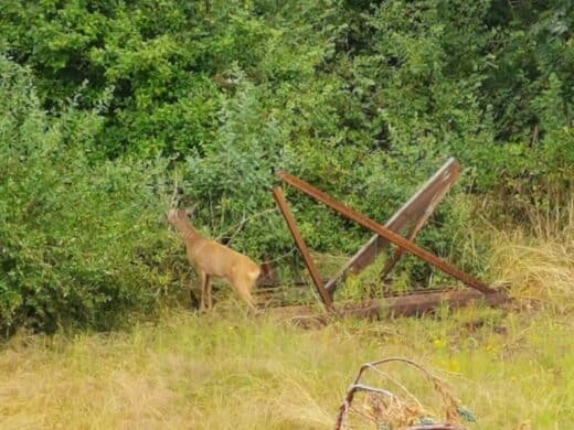 Ein Rehbock besuchte uns am Freitagmorgen