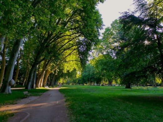 Schön leer morgens am Freitag im Unteren Schlossgarten