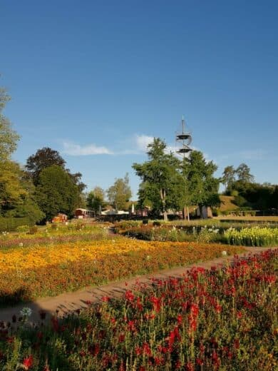 Blumenfeld im Höhenpark am Killesberg