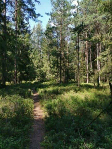 Einen schönen schmalen Waldweg folgten wir ein Stück in Richtung Waldsassen