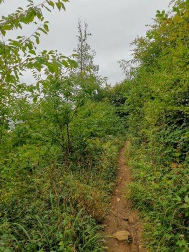 Teilweise herrliche schmale Wanderwege