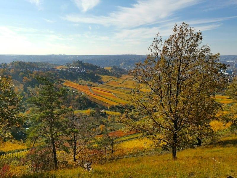 Blick auf den Rotenberg und die Grabkapelle im Herbst mit bunten Weinbergen