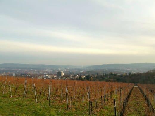 Blick auf Stuttgart vom Burgholzhof