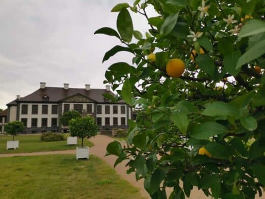 Das Schloss Oranienbaum