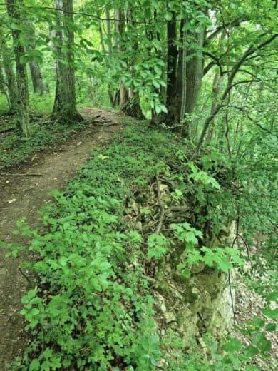 Der Weg führt auch mal am Abgrund entlang auf der Berta-Hörnle-Tour