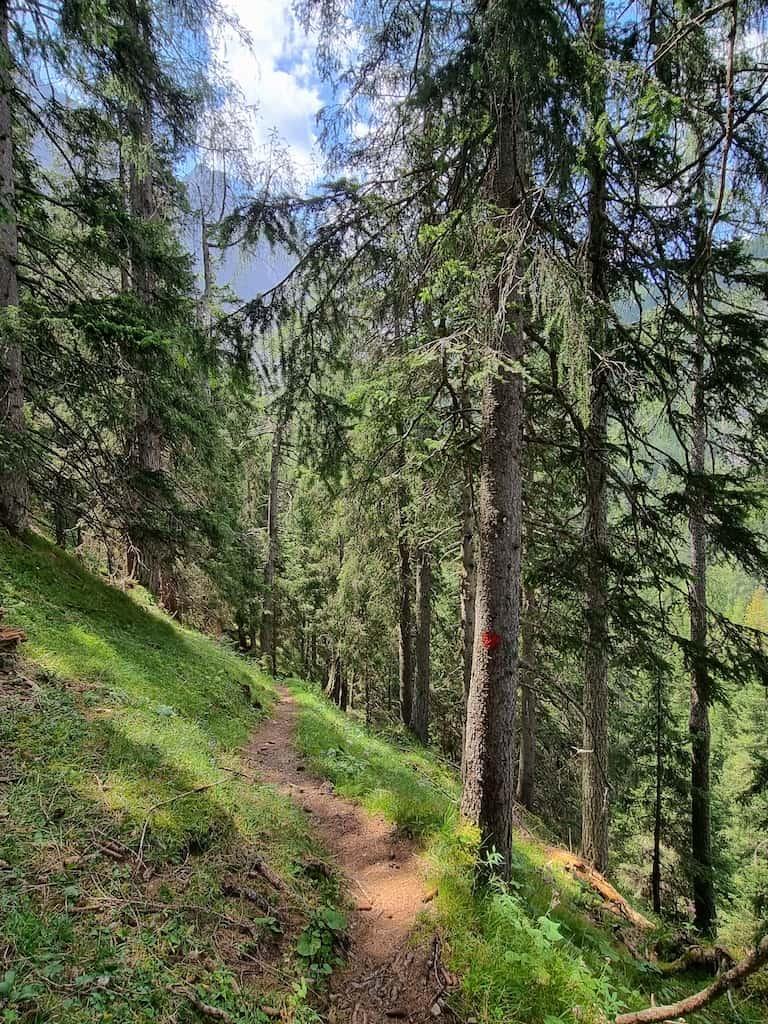 Herrlicher Weg im Wald zum Alpgrat