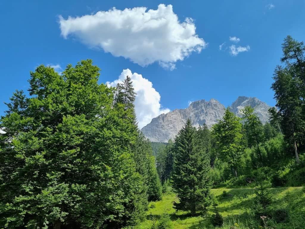 Herrlicher Blick durch Bäume auf die Berge