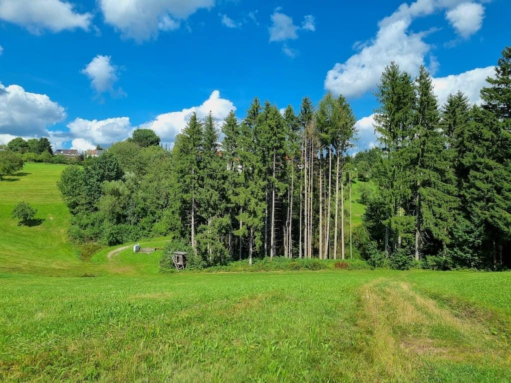 An der Stelle nicht unserem Track folgen, sondern grade aus unten auf den kleinen Waldweg bitte und später dann links...