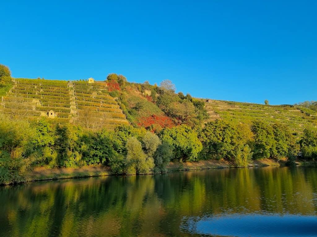 Abendliche Weinberge am Neckar